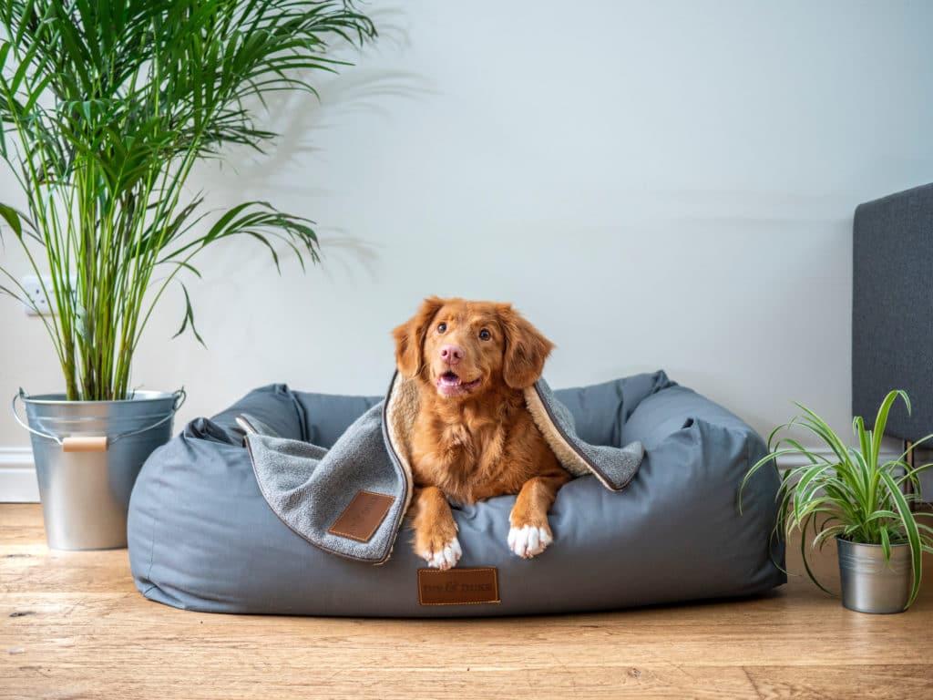 Hundegebell als HomeKit-Alarmanlage